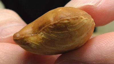 Pucca-プッカ-チョコレート(明治)11